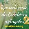 reprodfucción de peces Escalares o Angeles