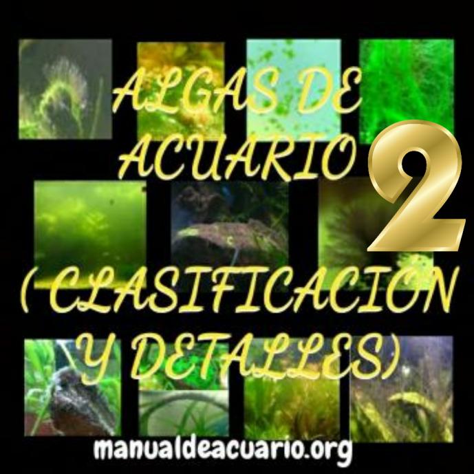 clsificación de algas de acuario 2