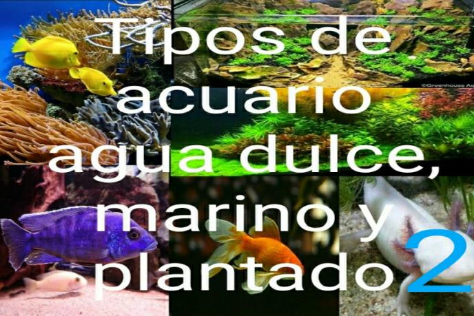 tipos de acuario de agua dulce, marino y plantado 2