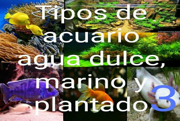 Tipos de acuarios 1.3 de agua dulce, marino y plantados