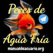 Grupo de peces Carassius o Goldfish y Koi en telegram
