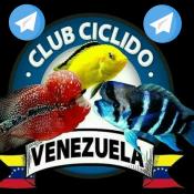 Club Ciclidos Venezuela en Telegram