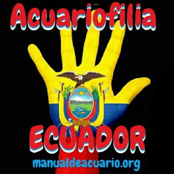 Acuariofilia ecuador