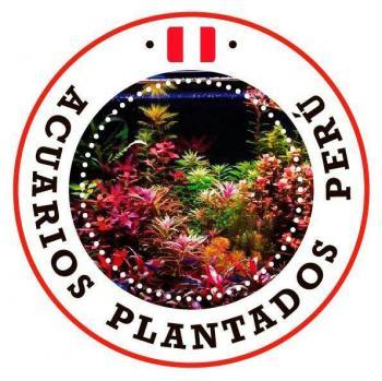 Acuarios plantados peru 20190614 223940