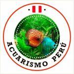 Acuarismo peru 20190614 223919