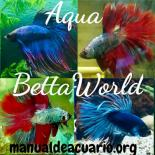 Aqua betta world 20190408 222344