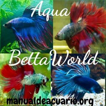 Aqua betta world 20190408 222344