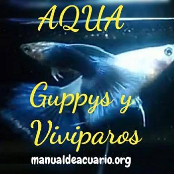 Aqua guppysviviparos 20190416 233208