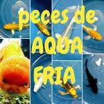 Aqua peces de agua fria 20190408 222221