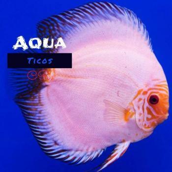 Aqua ticos 2 20190408 223004