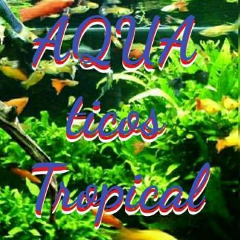 Aqua tropicales 20190706 001644