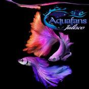 Aquafans jalisco en telegram