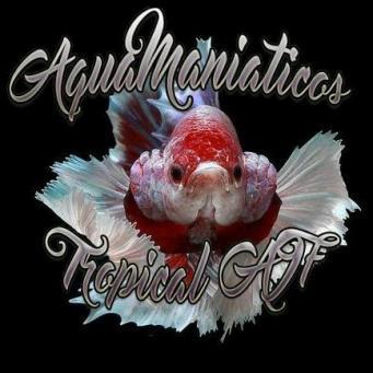 Aquamaniacostropicala i f.