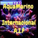 Aquamarino internacional a i f