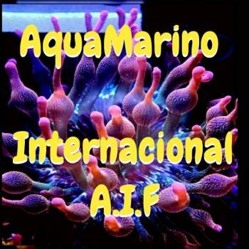Aquamarino internac a i f 20190408 222659