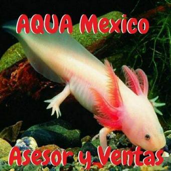 Aquamexico asesorventas