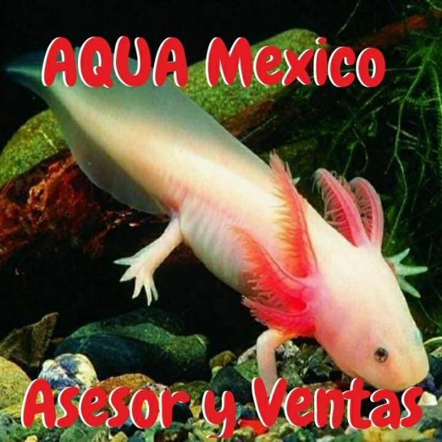 Aquamexico asesorventas 20190408 223208