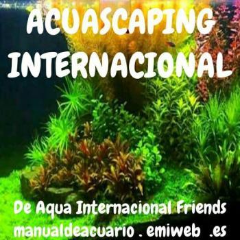 Aquascaping internacional 20190416 231944