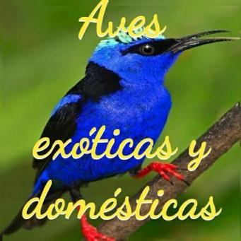 Grupo Whatsapp de aves exoticas y domesticas de Aqua Internacional Friends