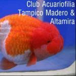 Club acuarista tamaulipas 20190420 232029