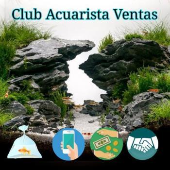 Club acuarista ventascr 20190408 223126