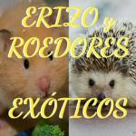 Erizo y roedores exoticos