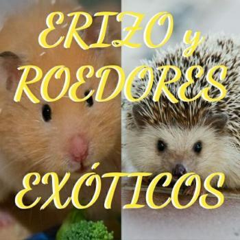 Erizo y roedores exoticos 20191001 022243