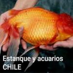 Estanque y acuarios chile