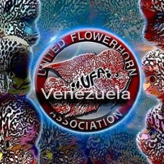 Grupo Whatsapp Flower Horn Association