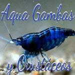 Gamba molusc y crustac 20190408 222721