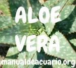 Aloe Vera en acuarios