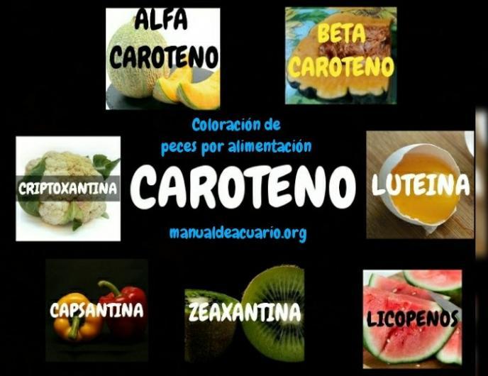 Coloración en peces por alimentación CAROTENOS
