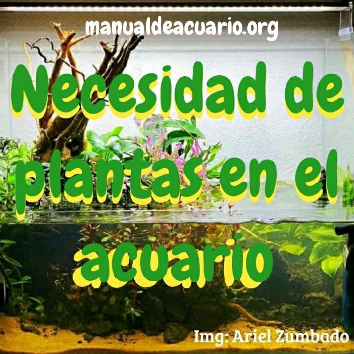 Necesidad de plantas en el acuario