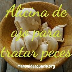 http://www.manualdeacuario.org/foro/test-y-enfermedades/el-ajo-en-el-acuario.html