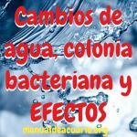 Cambios de agua, colonia bacteriana benéfica y efectos