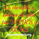 Clorofila y colores de plantas verdes y rojas en acuarios