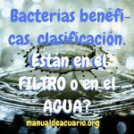 Bacterias benéficas, clasificacion, están en el filtro o en el agua