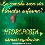 Hidropesia en peces