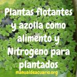 Plantas flotantes y Azolla como alimento y nitrógeno para plantados