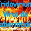 enfermedad Iridovirium en peces laberintidos