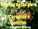 plantas aptas para Carassius