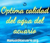 Óptima calidad del agua del acuario