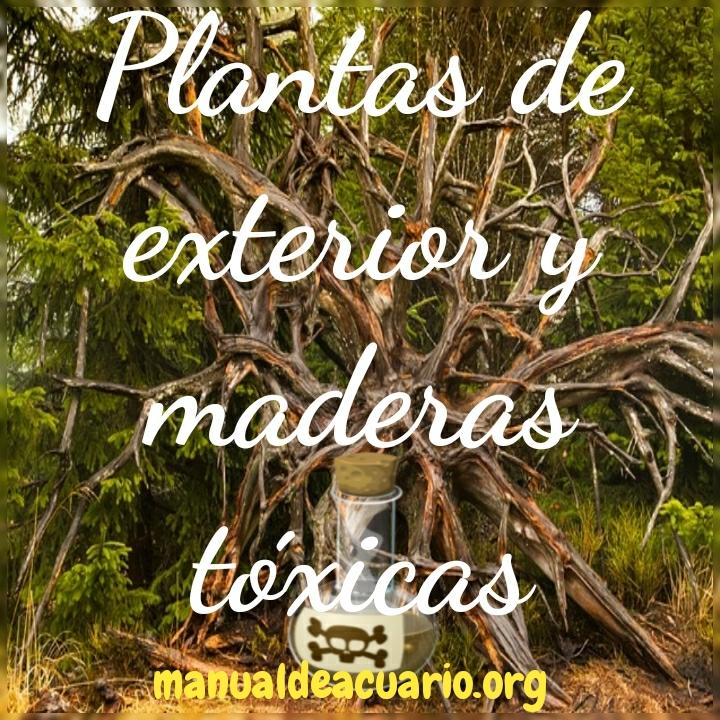 Plantas de exterior y maderas tóxicas