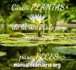 Curar troncos y plantas de la naturaleza, cuarentena para peces
