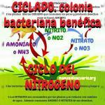 Ciclo del nitrógeno de manualdeacuario.org