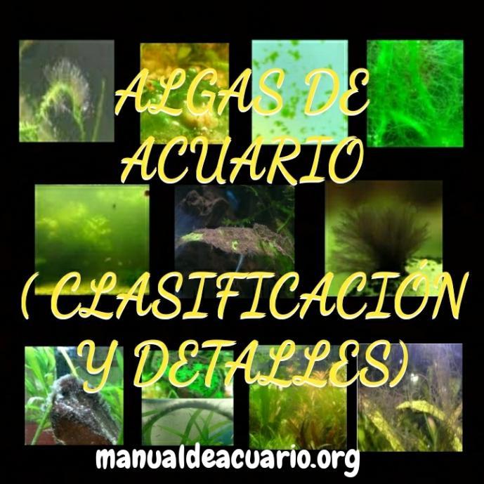 Algas de acuario clasificación y como eliminarlas