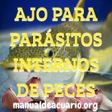 Mata parásitos internos de peces con ajo