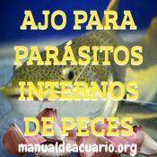 tratar parasitos internos con Alicina de Ajo
