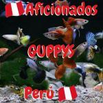 Grupo Whatssappaficionados guppys Perú