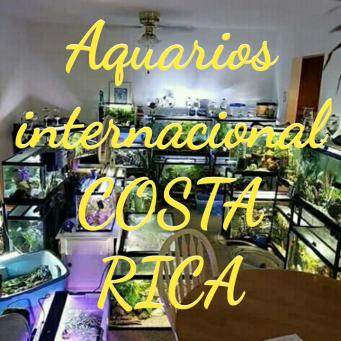 ACUARIOS INTERNACIONAL COSTA RICA